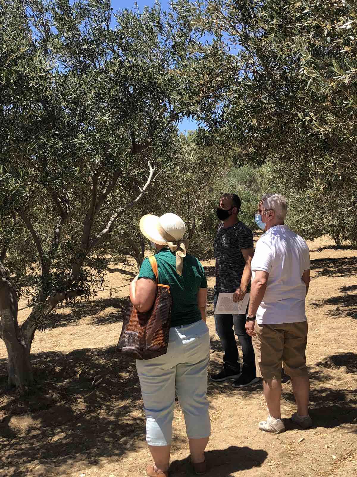 Tour in Mykonos & Wine Tasting